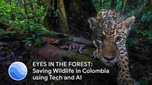 Eyes in the forest